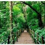 Top 10 Countries With the Largest Forest Area